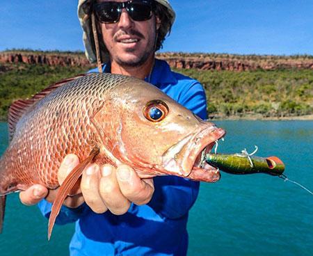 Mangrove Jack caught on Kuri Bay Sportfishing Tours